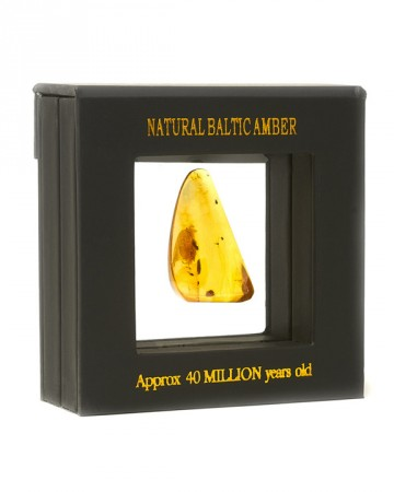 amber-souvenir-paris-incl-1-2